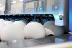 ひび卵検査装置